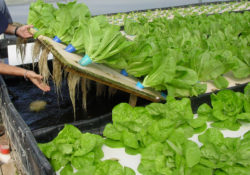 Close-up of Aquaponics System