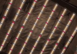Grower's Choice ROI-E680 LED Grow Light Review
