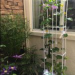 Best Indoor Hydroponic Systems