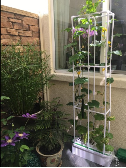 Best Indoor Hydroponics Systems