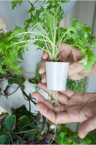 Foody Individual grow cup