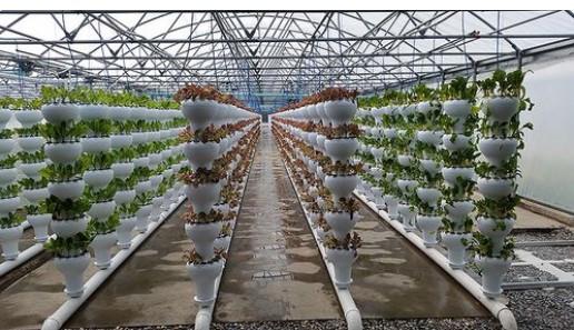 Commercial Foody Vertical Garden