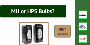 MH and HPS Bulbs
