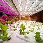Best LED Grow Lights for 2020