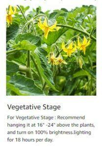 Vivarspectra Vegetative Height