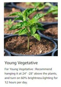 VivarSpectra Young Vegetation Height