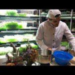 Make Money Growing Microgreens Indoors