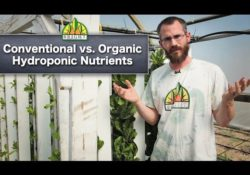 conventional vs organic hydroponics video