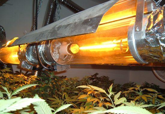 Best HID Grow Lights